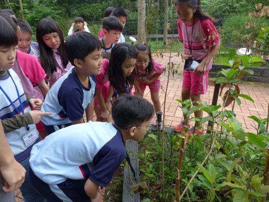 內雙溪自然中心:戶外教學