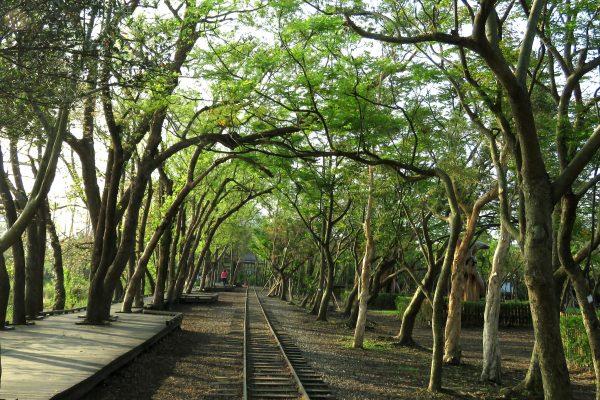 羅東自然教育中心:林蔭下的森林鐵路